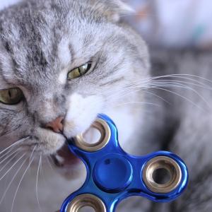 猫の噛み癖がある時の叱り方は?注意点と治す方法は?