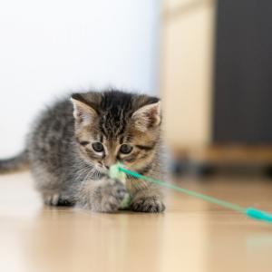 猫が二の腕を噛む理由は?しつけ方と予防法は?
