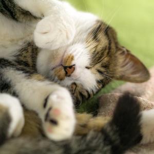 老猫がトイレでしない時の対処法は?原因と数はどうする?