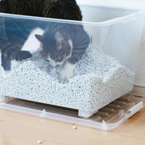老猫がトイレからはみ出す時の対処法は?原因とトイレの選び方は?