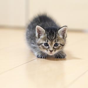 猫は泣くと来るのはどうして?噛むときの対処法と原因は?