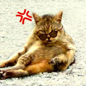 猫を叱ると逆ギレするのはどうして?対処法と注意点は