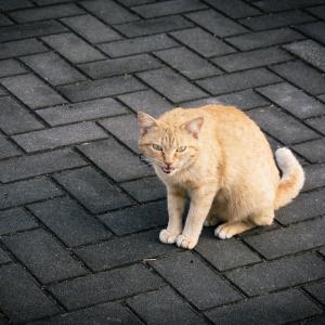 保護猫を飼う時に注意した方が良い点は?必ずやるべき事としつけ方は?