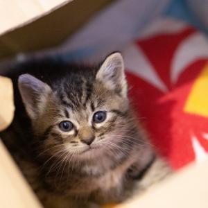 保護猫が急に鳴くようになった原因は?対処法と鳴き方の気持ちは?
