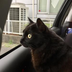 猫の車酔いで下痢になってしまった時は?原因と対処法は?