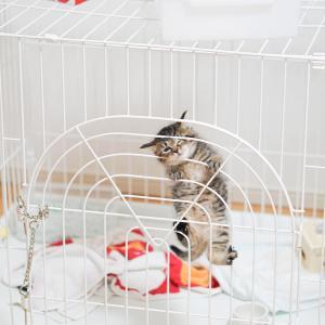 猫の部屋の隔離でストレスをためさせない方法は?注意点と猫エイズの正しい知識は?