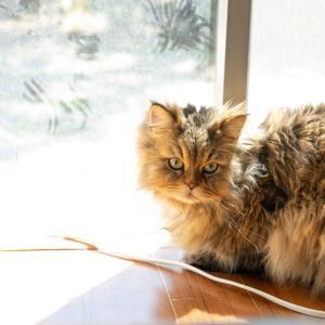 猫の部屋の効率のいい換気の方法は?注意点と時間の目安は?