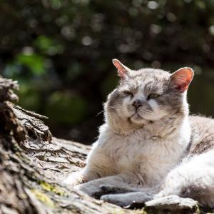 老猫の下痢が止まらない時の対処法は?原因と病院に連れていく目安は?