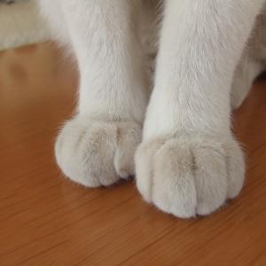 猫の傷ができた時の消毒方法は?注意点と人間用はいいの?