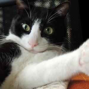 猫が鈴付きの首輪を嫌がる理由は?慣れさせ方とデメリットは?