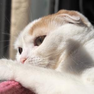 猫が不安になった時にとる行動は?対処法と不安にさせない環境は?