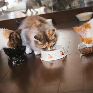 猫が病院食を食べてくれない時の工夫は?原因とあげる回数は?