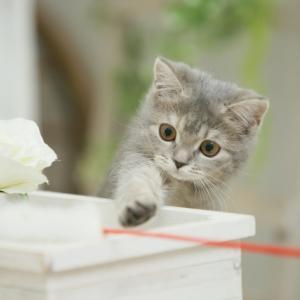 子猫にキャットタワーはいつから用意した方が良い?選び方と注意点は?