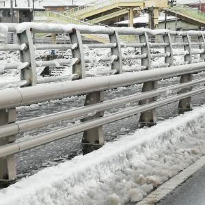 雪に弱くて…(;^∀^)