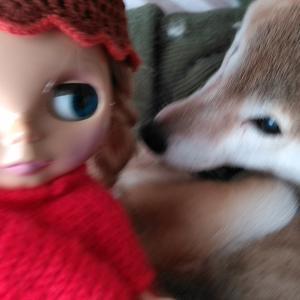 新しい趣味を持ちたいならブライス人形がおすすめ!