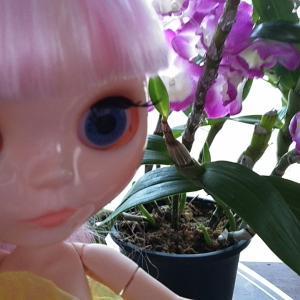 ブライス人形と花言葉!