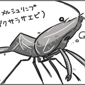 生体追加!!【キャメルシュリンプ】