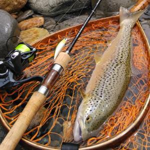 2021長良川サツキマス釣行日誌2「上流部でまさかのブラウン登場」