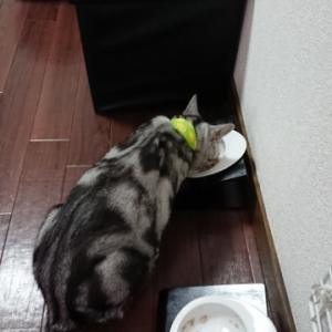 シシア~ツナ&キウイ~2