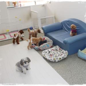 毎週金曜日は「犬の保育園」ですよ~!(^^)!