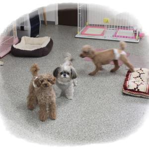 毎週金曜日は「犬の保育園」しています(^^)/