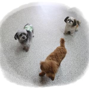 毎週金曜日は「犬の保育園」&トリミングわんこちゃん達5月29日まで