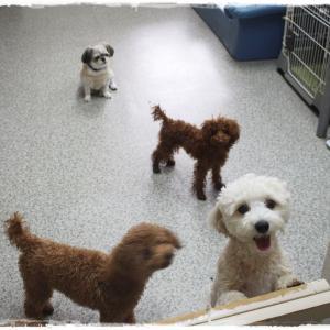 毎週金曜日は「犬の保育園」しています~(^^)/