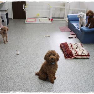 毎週金曜日「犬の保育園」&トリミングわんこちゃん達 アップしました~(^^)/