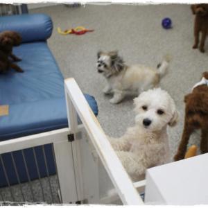 本日は犬の保育園&トリミングに来てくれたワン子ちゃん達 9月18日まで