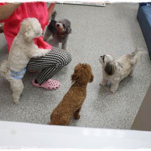 毎週金曜日は楽しい「犬の保育園」ですよ~(^^)/
