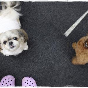 11月第四週 「犬の保育園」無事に終了しました~!(^^)!