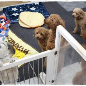 12月4日「犬の保育園」