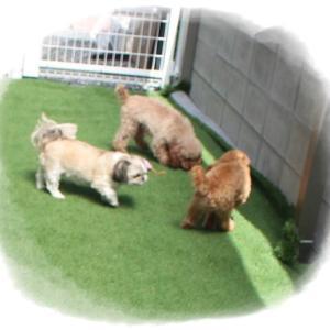 毎週金曜日の「犬の保育園」ですよ~(⋈◍>◡<◍)。✧♡