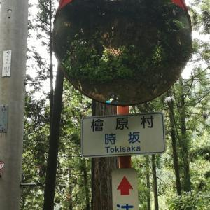 以前来たのは、檜原村の時坂峠でなかったのか