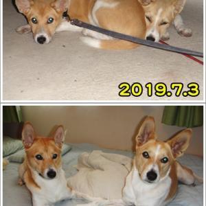 保護犬譲渡から1年♪