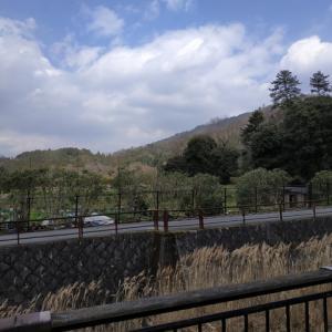 3/18 比叡山で野菜栽培②