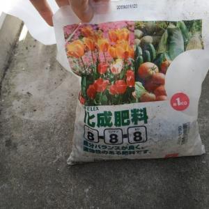 化成肥料を使ったらこんなことに 家庭菜園