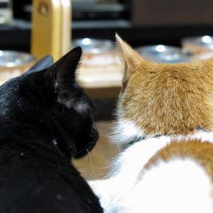 重い… あっくんの憂鬱(汗)【小夏 編】 _黒猫な日常:クロネコ「黒龍」