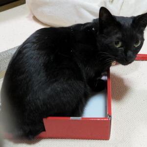 【チンピラ母娘(汗) 編】 カリカリ爪とぎねこピアノ_黒猫な日常:クロネコ「黒龍」