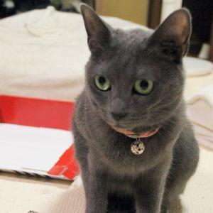 【ストレス 発散? 編】 カリカリ爪とぎねこピアノ_黒猫な日常:クロネコ「黒龍」