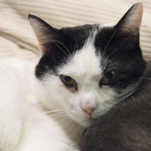 シンクロ率♪【ハル 編】_黒猫な日常:クロネコ「黒龍」