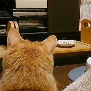 凝視!【NANA:TVっ子 編】_黒猫な日常:クロネコ「黒龍」