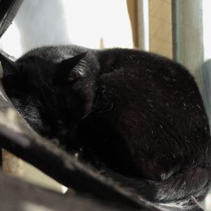 2020 人気スポット♪ 【窓辺ッド&キャットタワー 編】_黒猫な日常:クロネコ「黒龍」