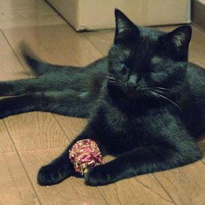 """""""猫の日""""記念!【祝 1周年♪】_黒猫な日常:クロネコ「黒龍」"""
