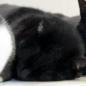 やっぱり真ん中♪ 【お風呂 編】_黒猫な日常:クロネコ「黒龍」