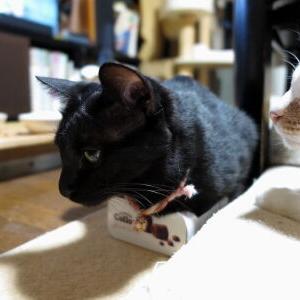 続モヤモヤ(笑)♪ 【小夏 編】_黒猫な日常:クロネコ「黒龍」