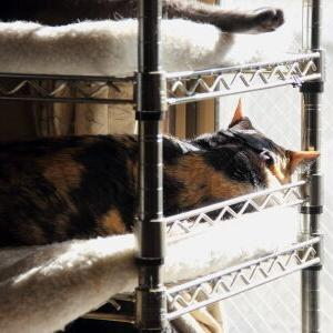 復活!フクロウ棚ベッド♪ 【なっちゃんファミリー占拠中 編】_黒猫な日常:クロネコ「黒龍」