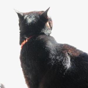 順番待ち? 【フクロウ棚ベッド 編】♪_黒猫な日常:クロネコ「黒龍」