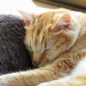 ストーカー♪ 【NANA 編】_黒猫な日常:クロネコ「黒龍」