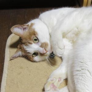 あっくんの誕生日♪ 【8歳:思い出アルバム】_黒猫な日常:クロネコ